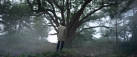 Coalition climat 21 arbre